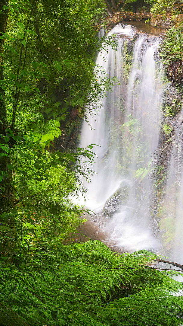 Leśny wodospad w Australii