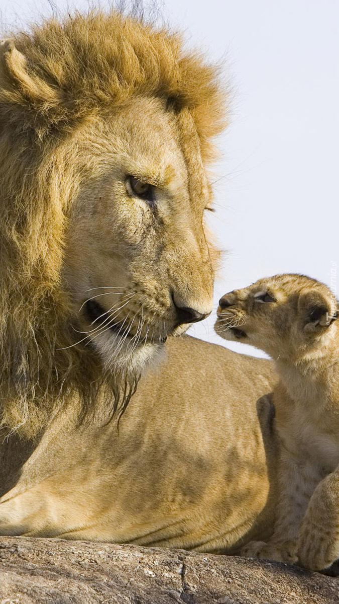 Lew i lwiątko