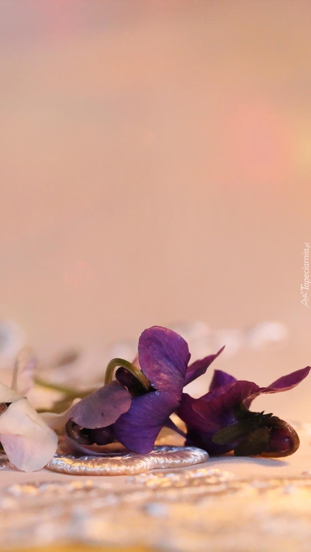 Leżące kwiatki fiołka