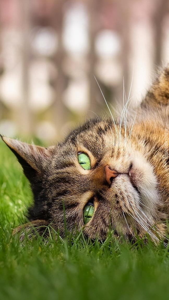 Leżący kot na trawie