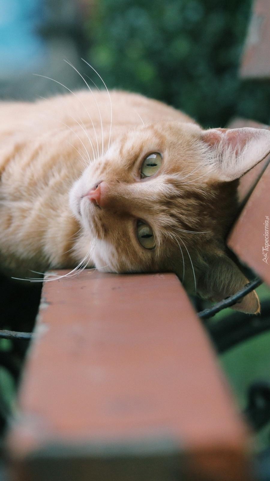 Leżący kotek