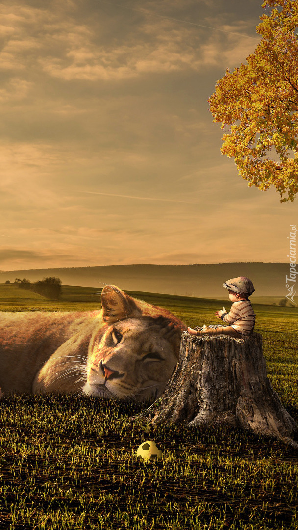 Leżący lew i chłopczyk na pieńku