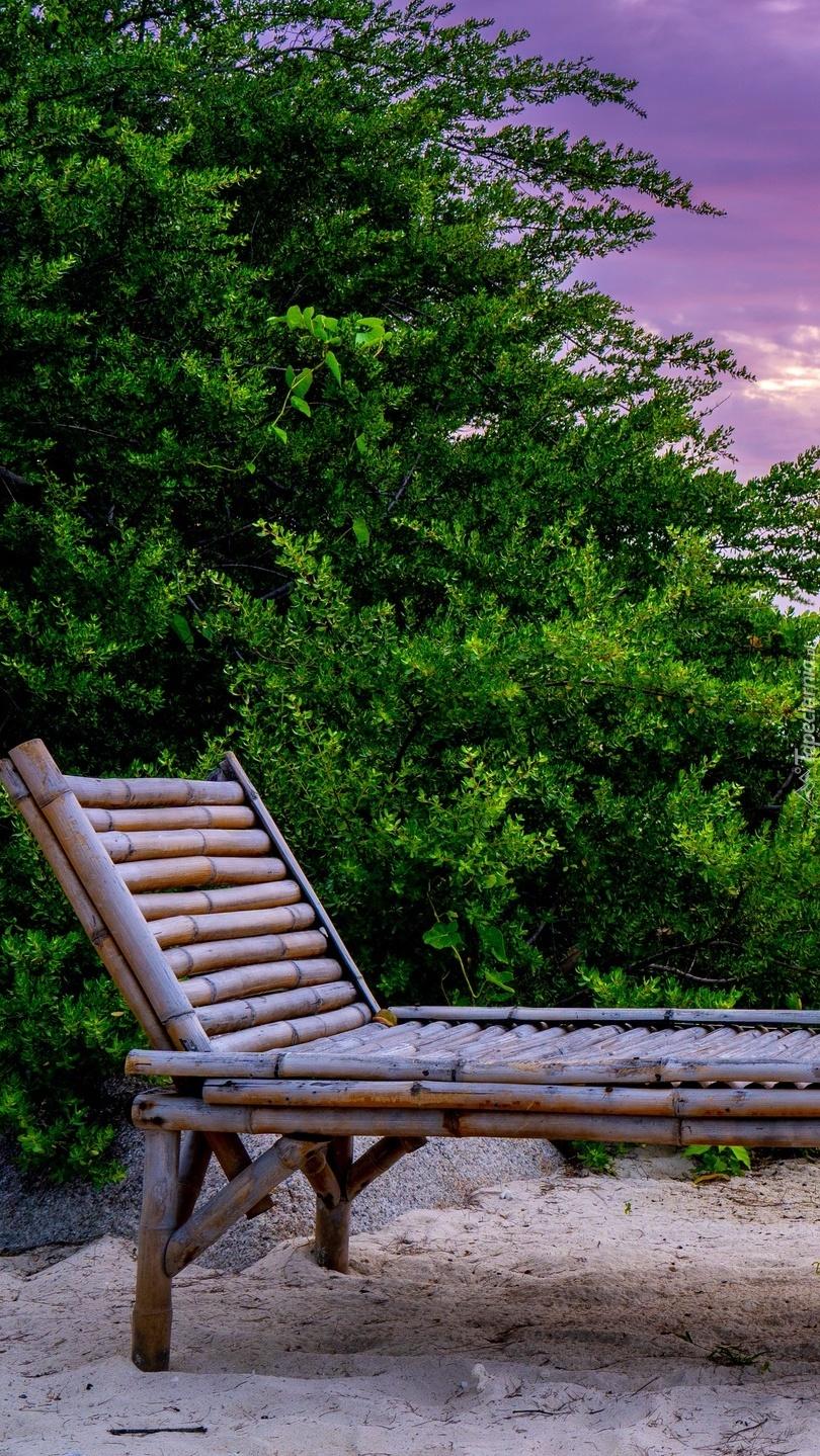 Leżak przy krzewie