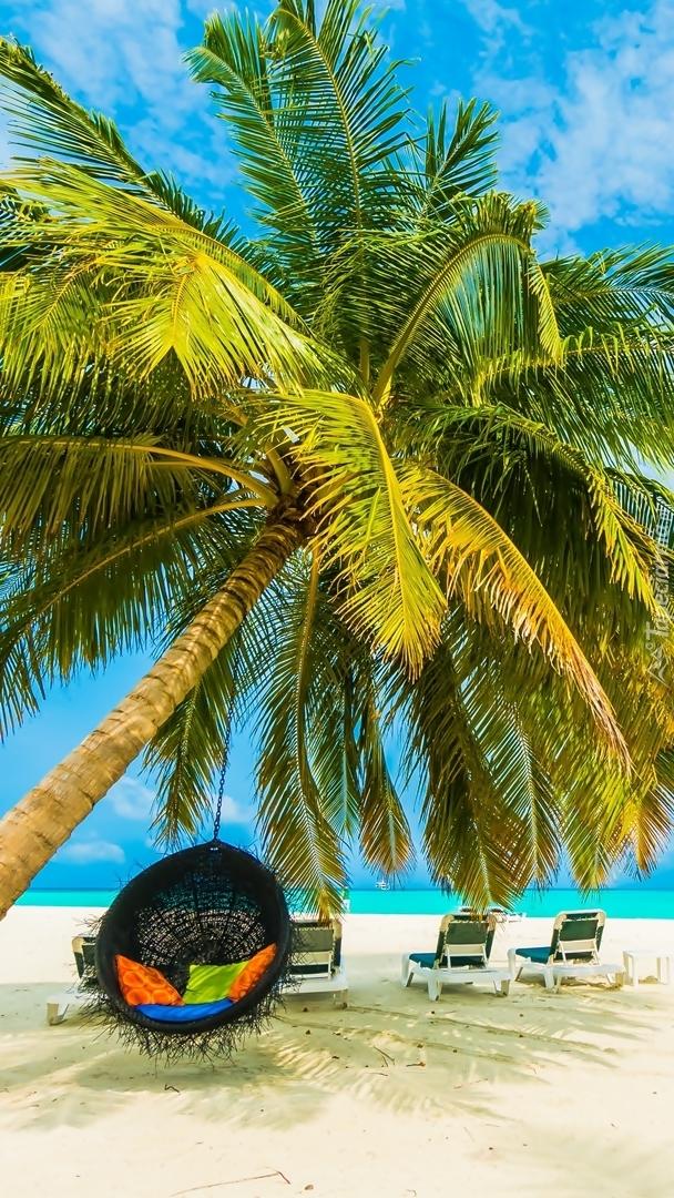 Leżaki i hamak pod pochyloną palmą