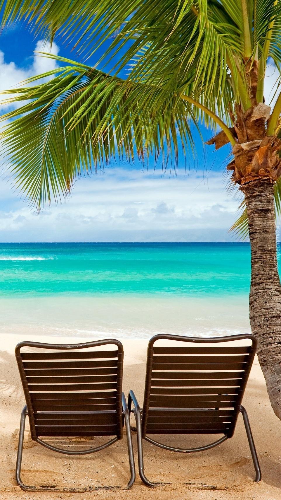 Leżaki pod palmą