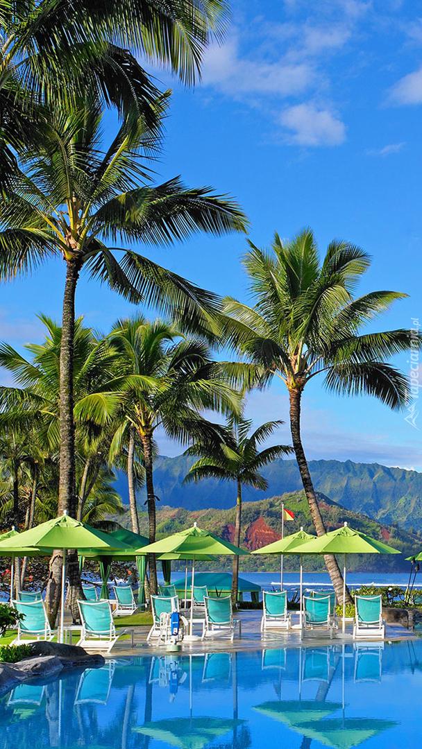 Leżaki pod palmami