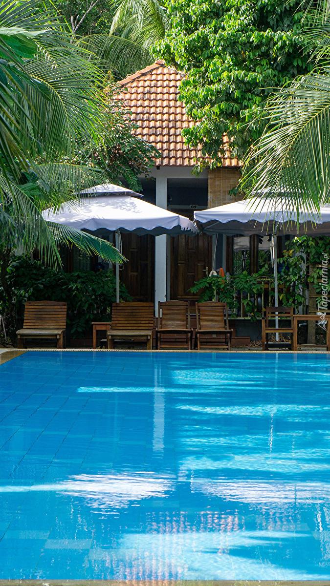 Leżaki pod palmami nad basenem