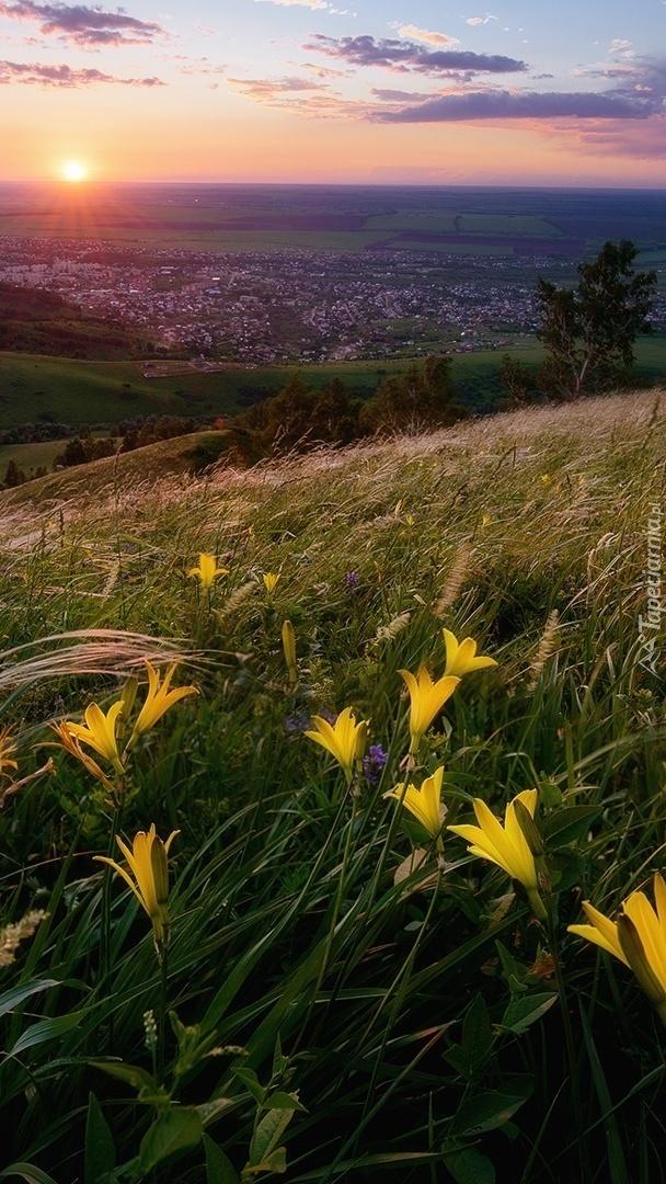 Lilie na wzgórzach