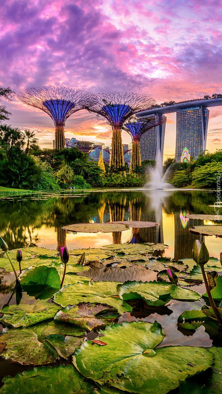 Lilie wodne w ogrodzie Gardens by the Bay w Singapurze