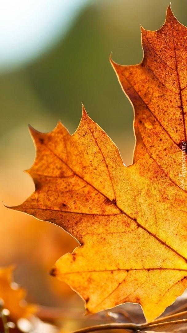 Liść jesienny