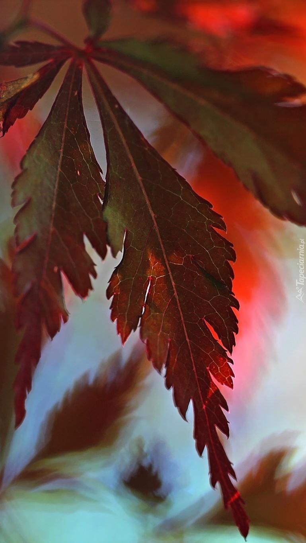 Liść w czerwieni