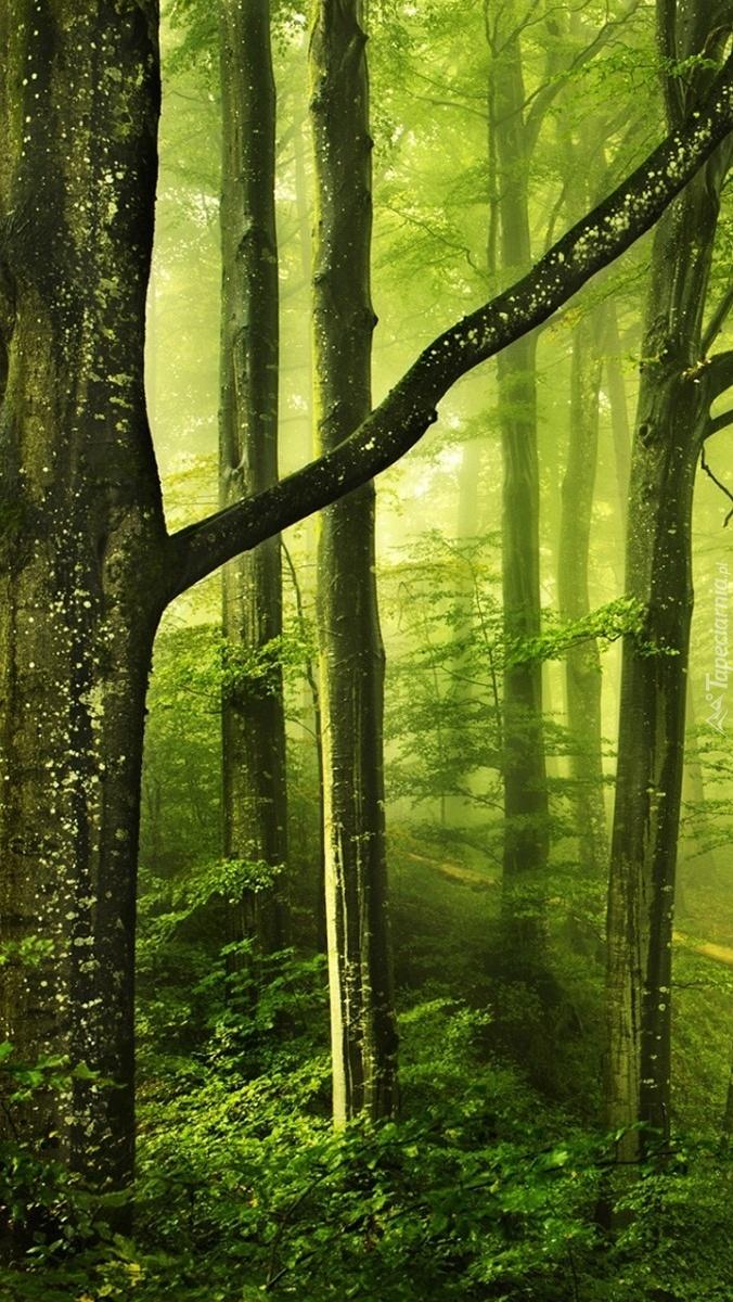 Liściasty las