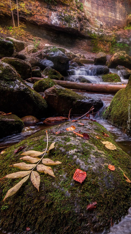 Liście na omszałych kamieniach w rzece