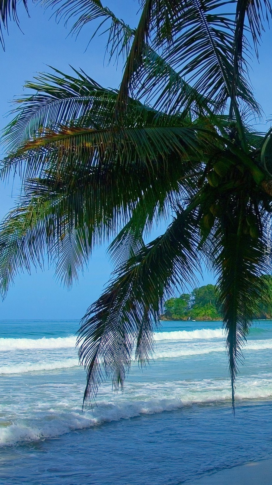 Liście palmy na tle morza