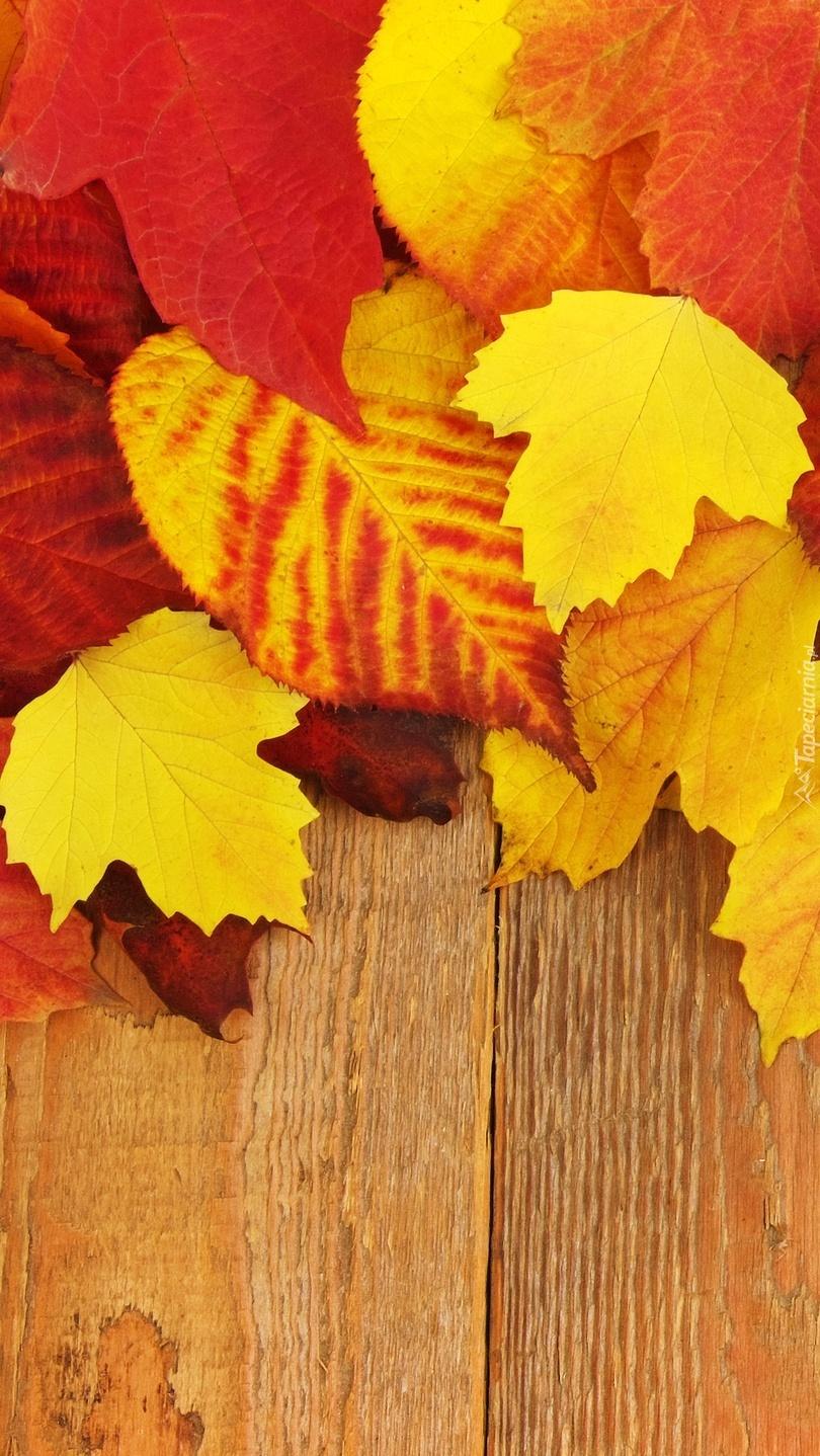 Liście w kolorach jesieni