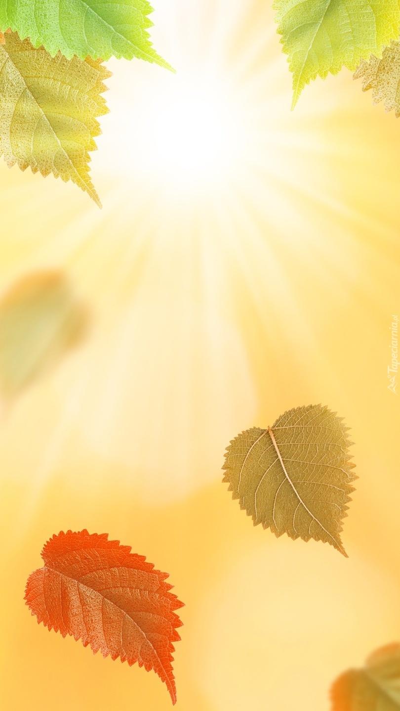Liście w promieniach słońca