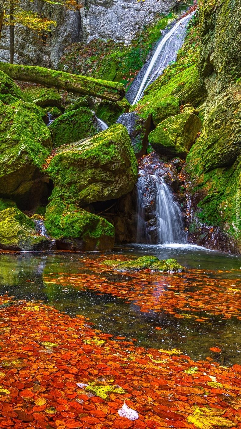 Liście w rzece obok skalnego wodospadu