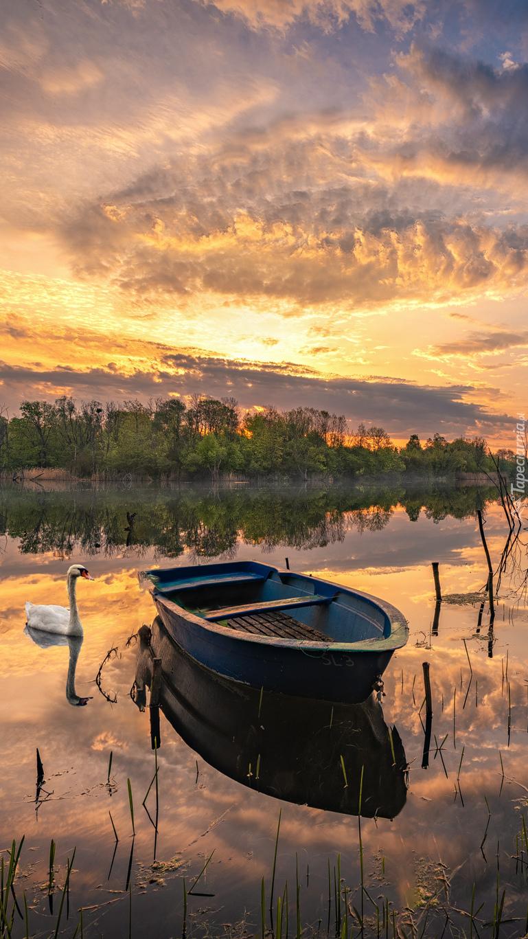 Łódka i łabędź na jeziorze
