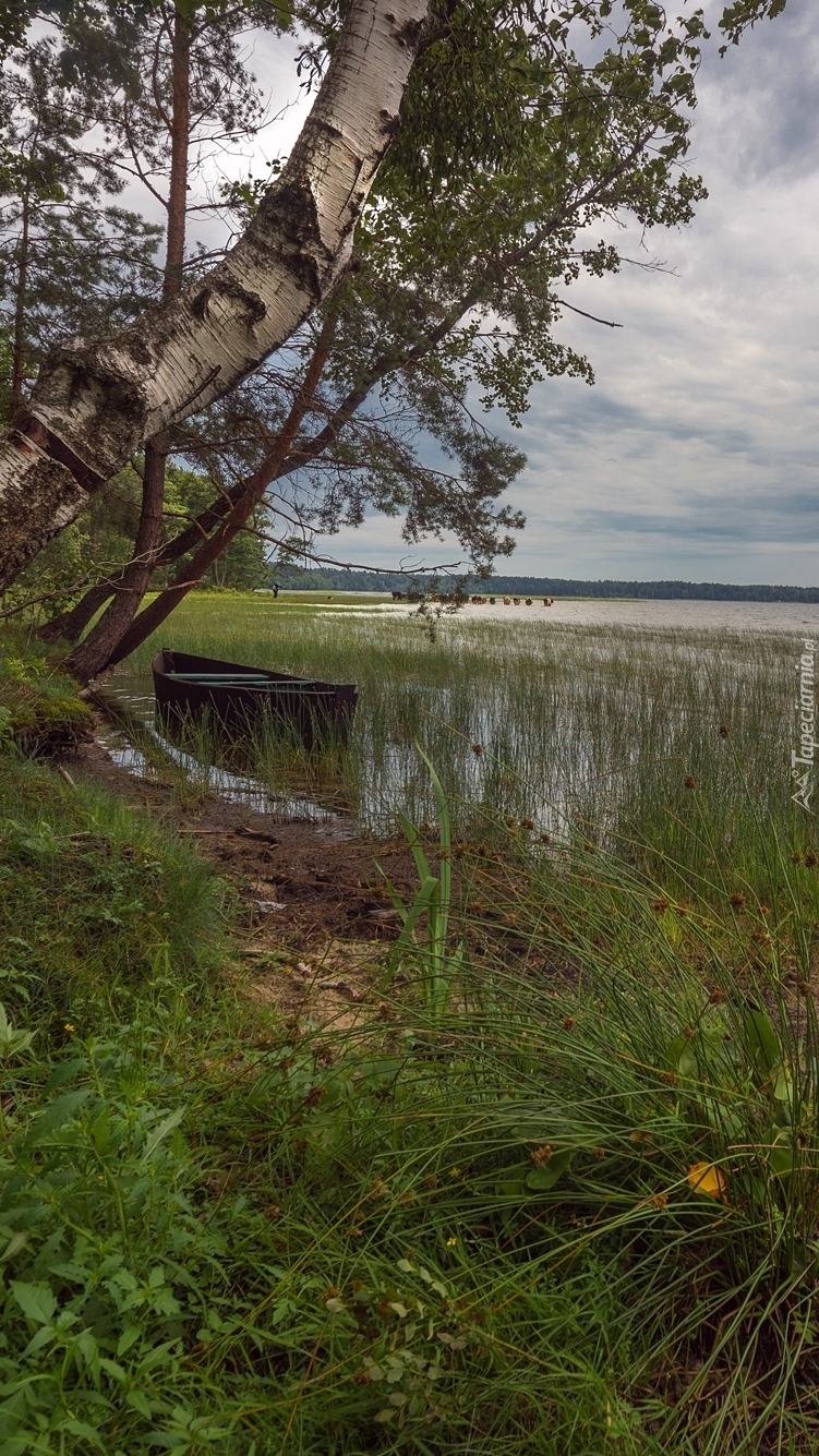 Łódka pod brzozą na brzegu jeziora