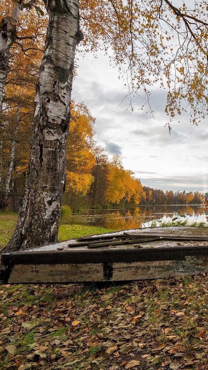 Łódka pod brzozą
