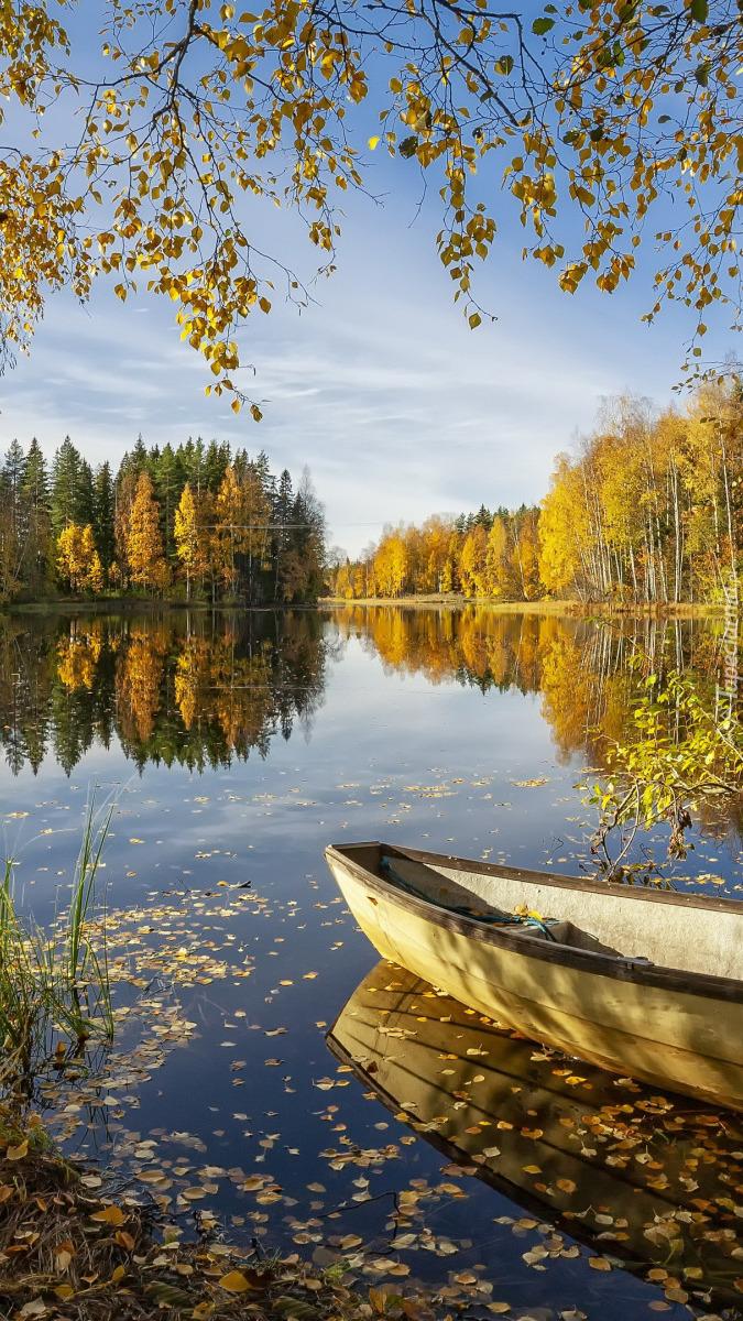 Łódka pod jesiennymi drzewami