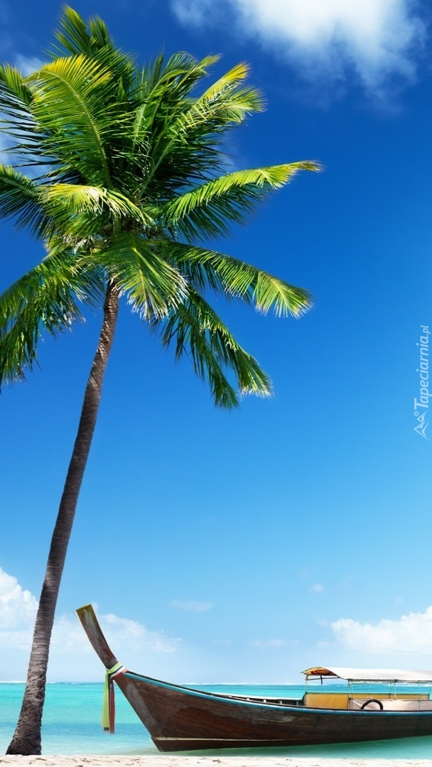 Łódka pod palmą