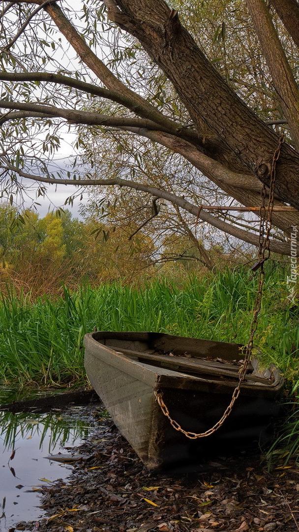 Łódka w szuwarach nad jeziorem
