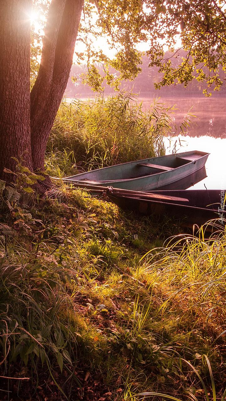 Łódki pod drzewem