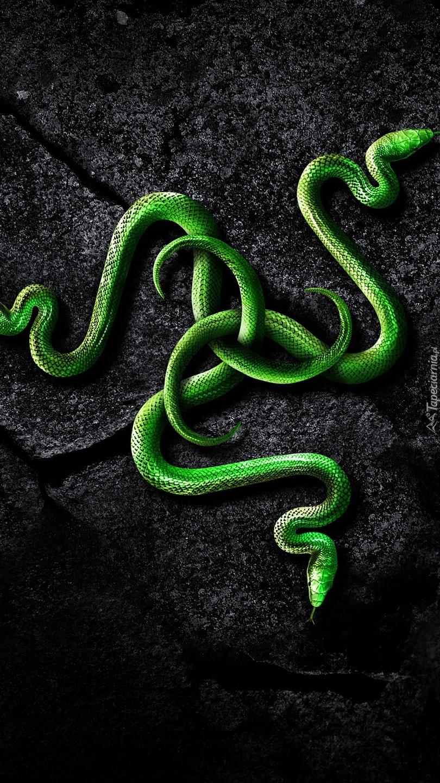 Wąż - Tapety na telefon