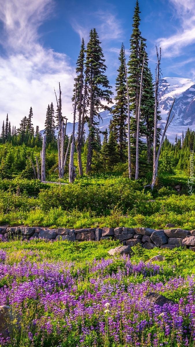 Łubin i drzewa na górskiej łące