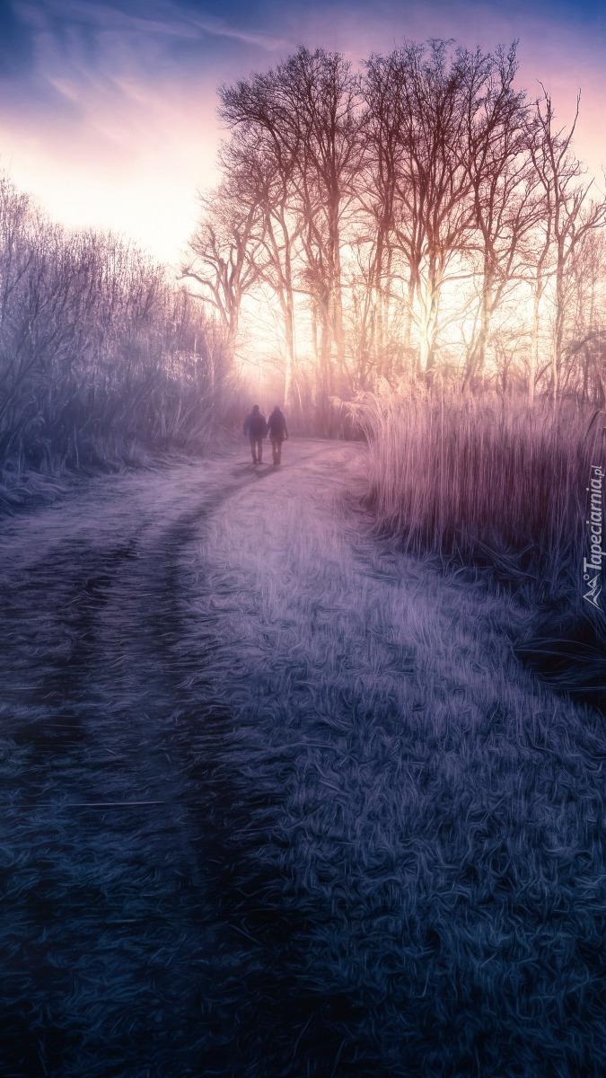 Ludzie spacerujący drogą między drzewami
