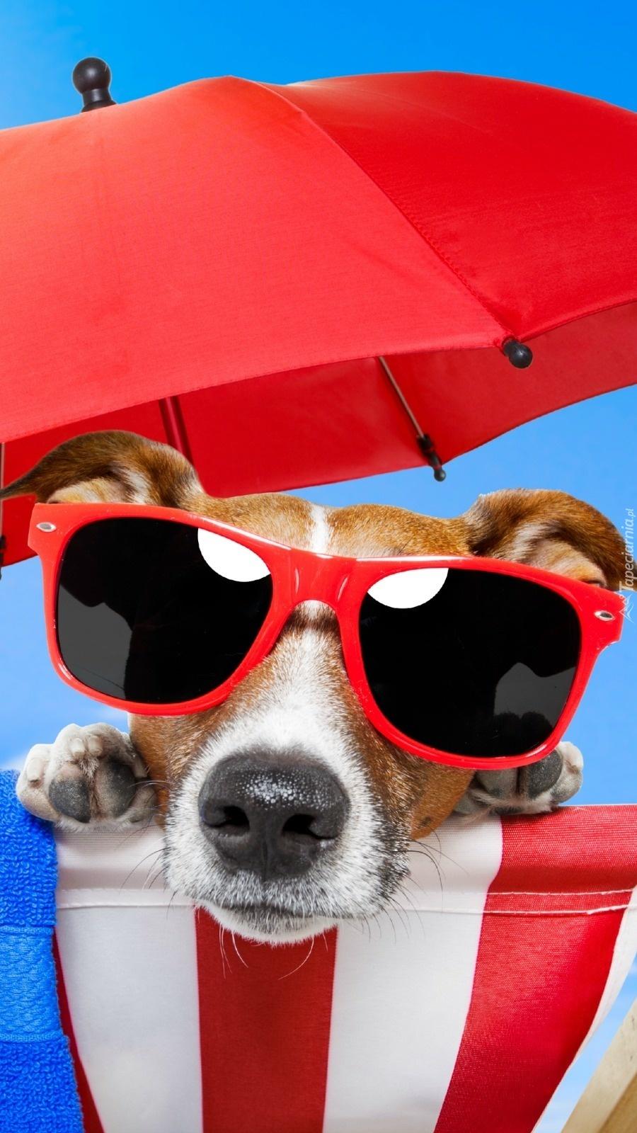 Luksusowe wakacje psa na plaży