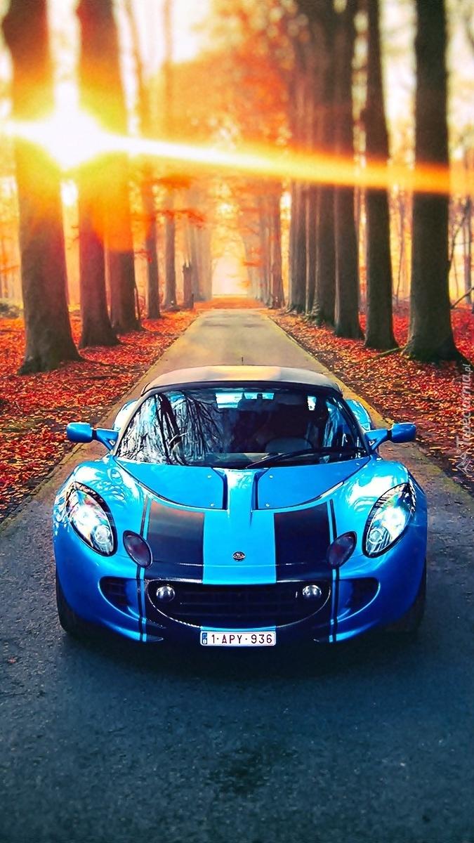 Luksusowy samochód jadący jesienną drogą pośród drzew
