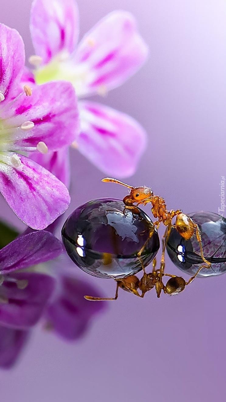 Lustrzane odbicie mrówki
