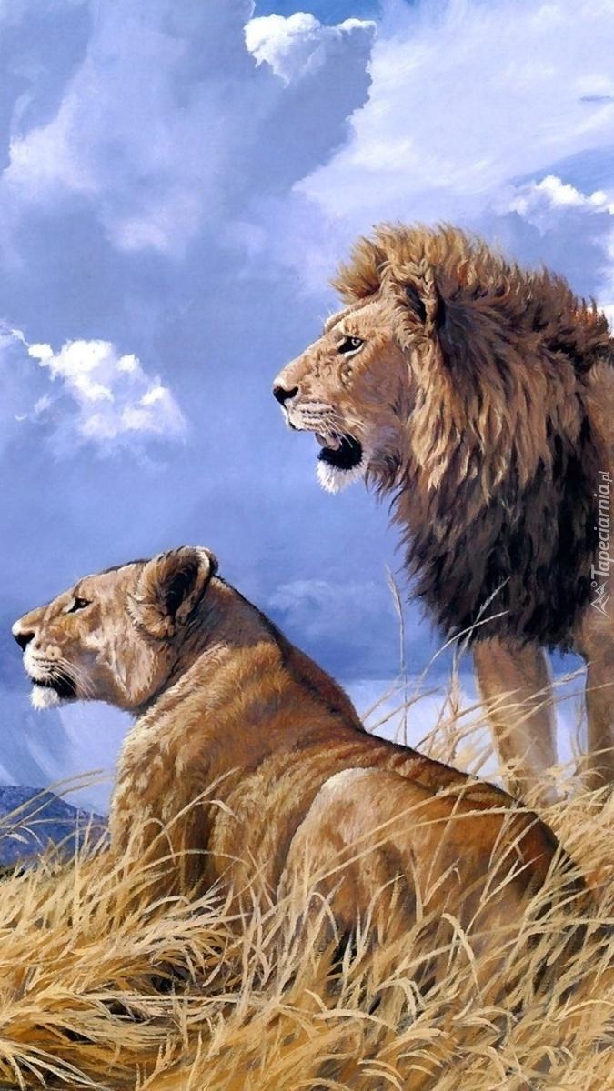 Lwy obserwujące teren