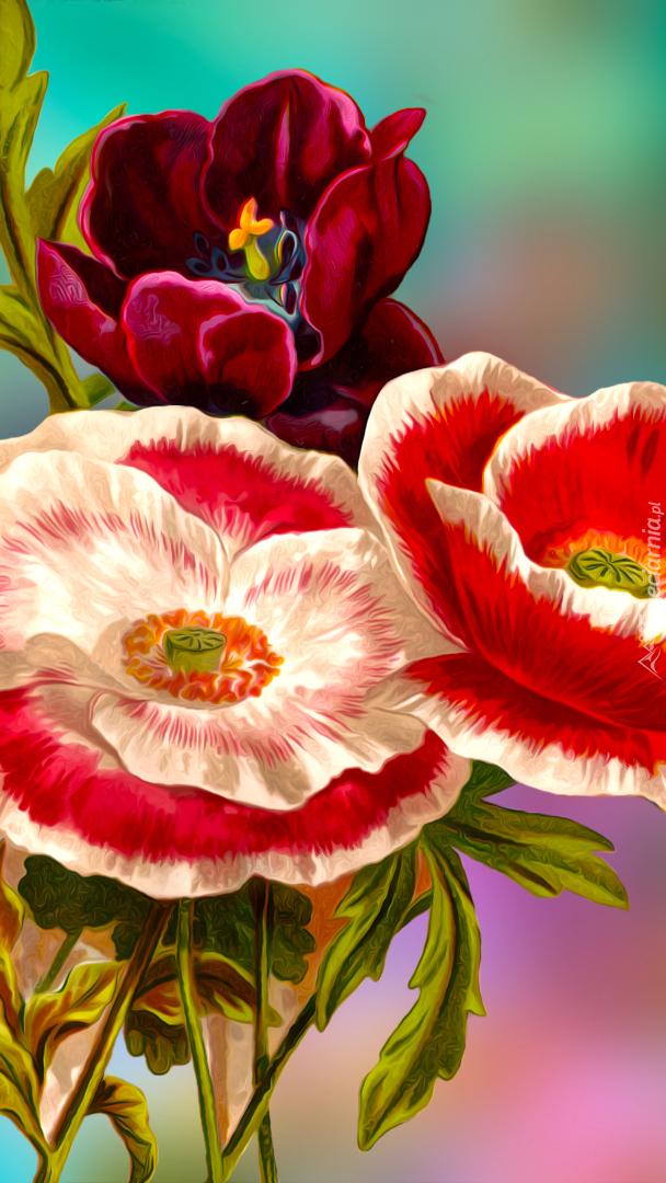 Maki i tulipan
