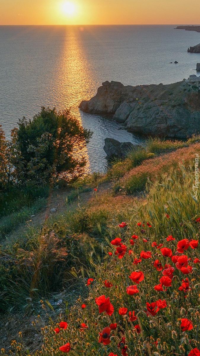 Maki na wzgórzu nad morzem