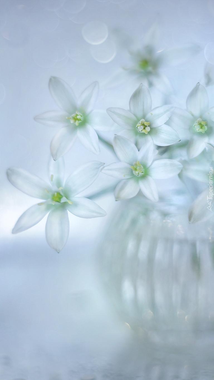 Małe kwiatki w szklanym wazonie
