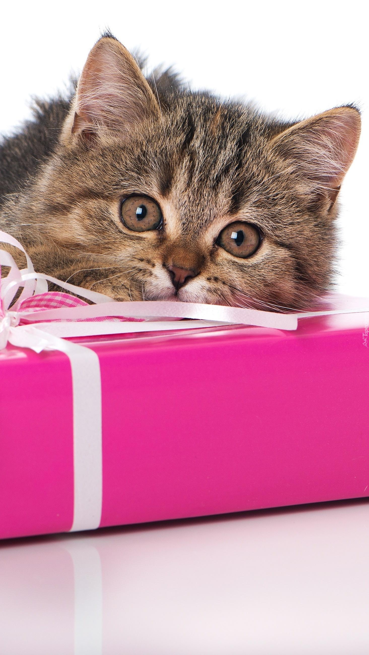 Mały kociak z prezentem