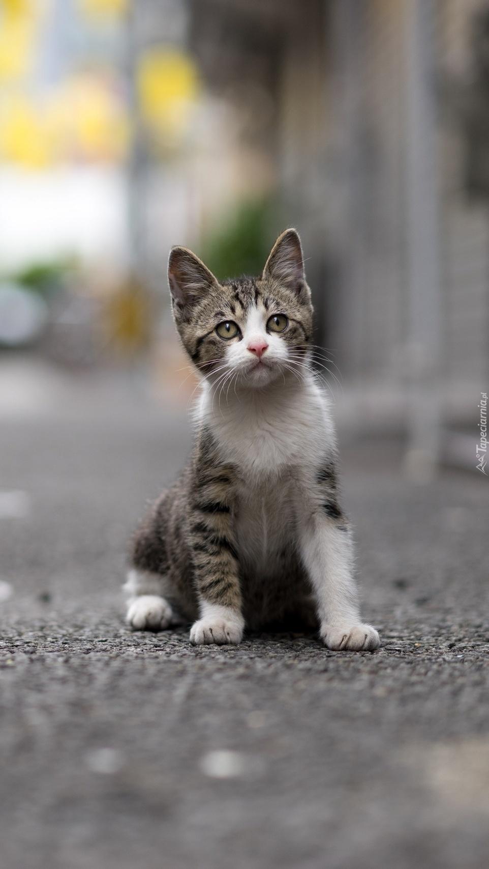 Mały kotek na drodze