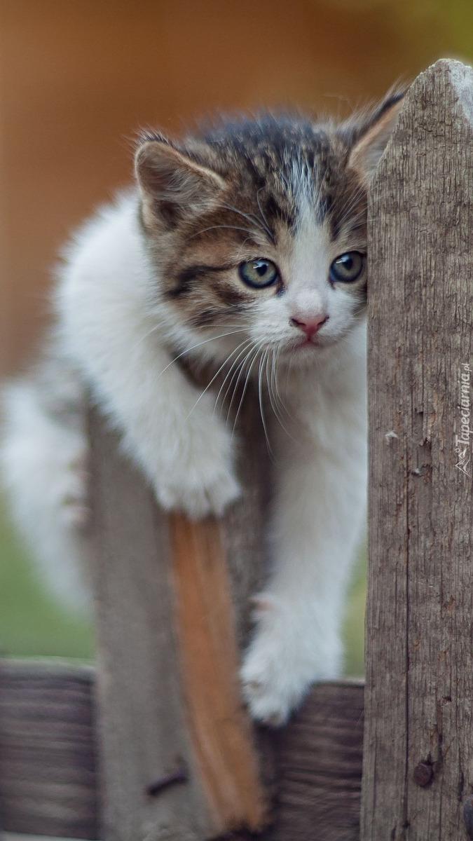 Mały kotek na płocie
