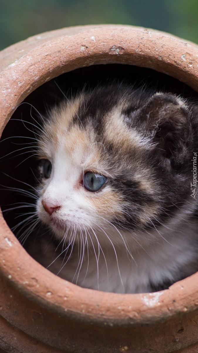 Mały kotek w glinianym garnku