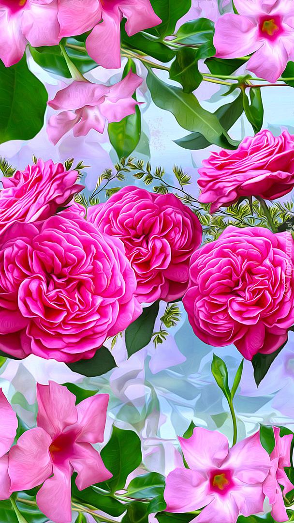 Mandewilla i róże w grafice