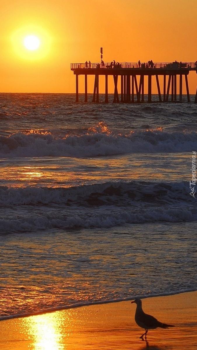 Mewa nad brzegiem morza