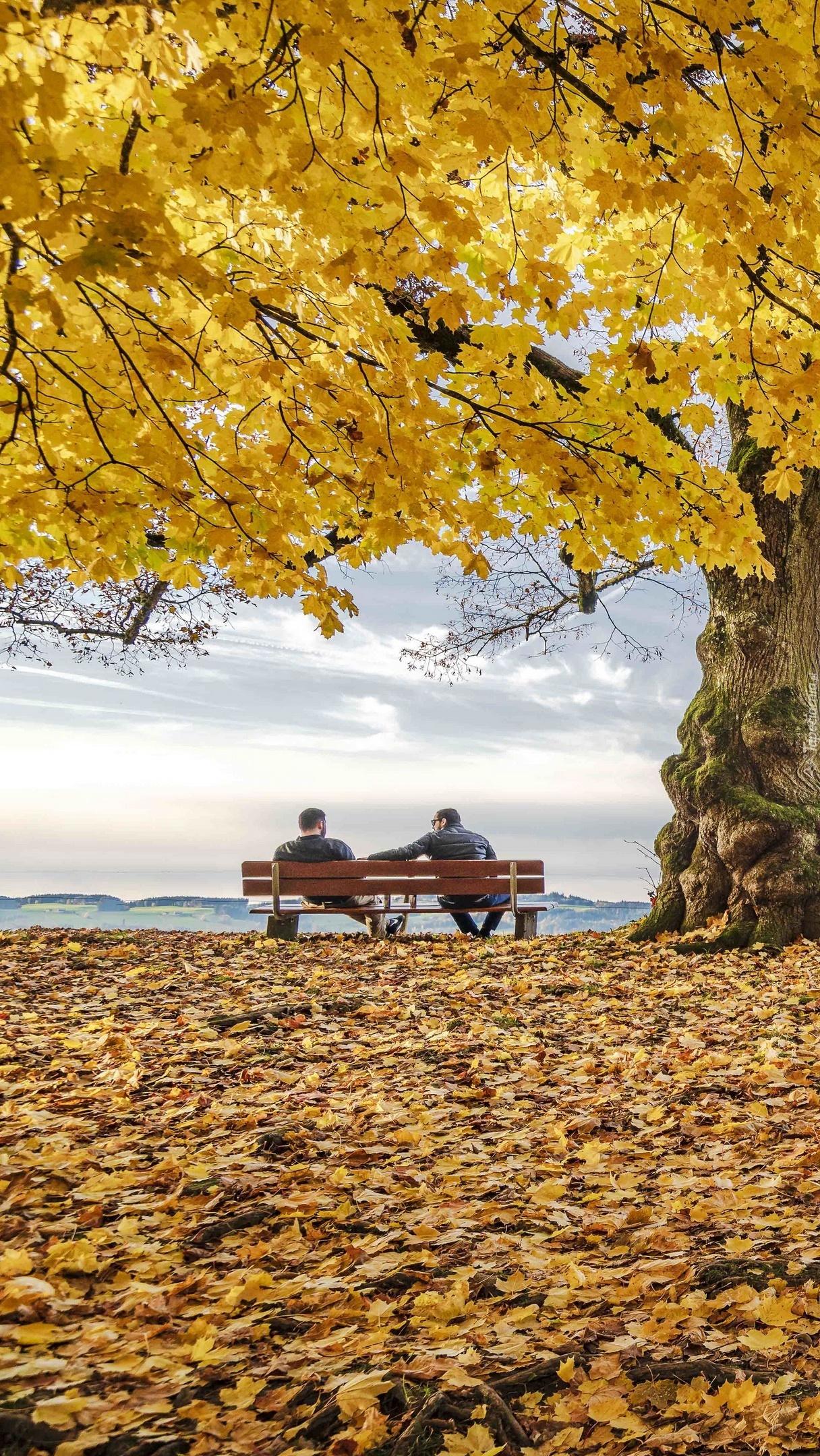 Mężczyźni na ławce pod pożółkłym klonem