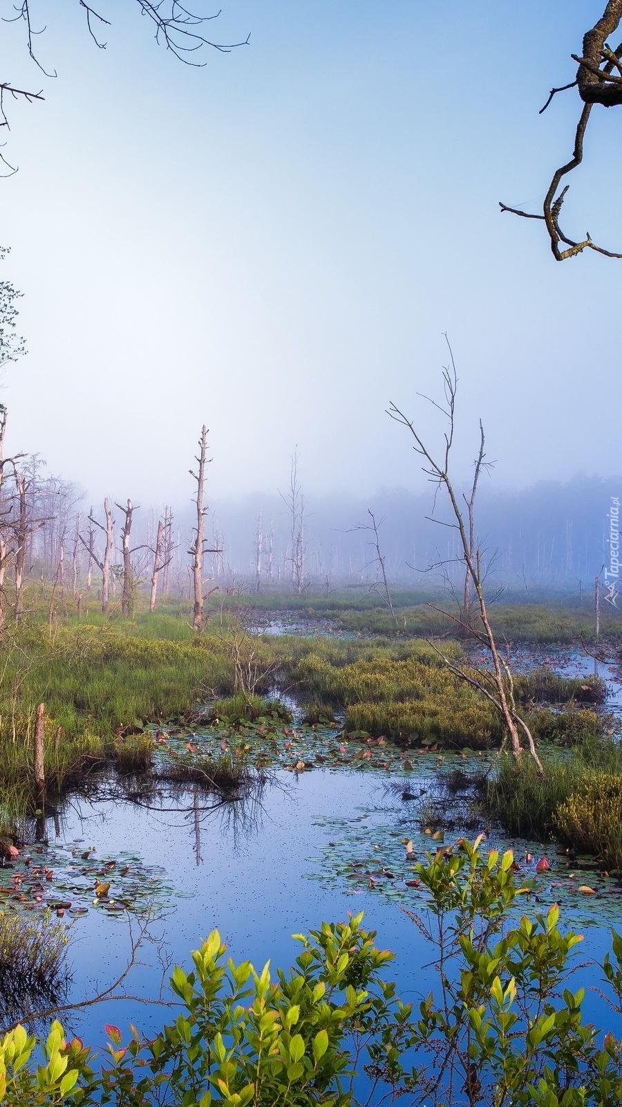 Mgła nad bagnami