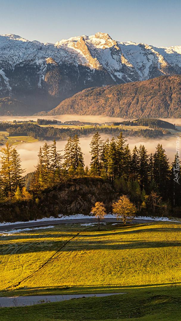 Mgła nad łąkami w słonecznym blasku