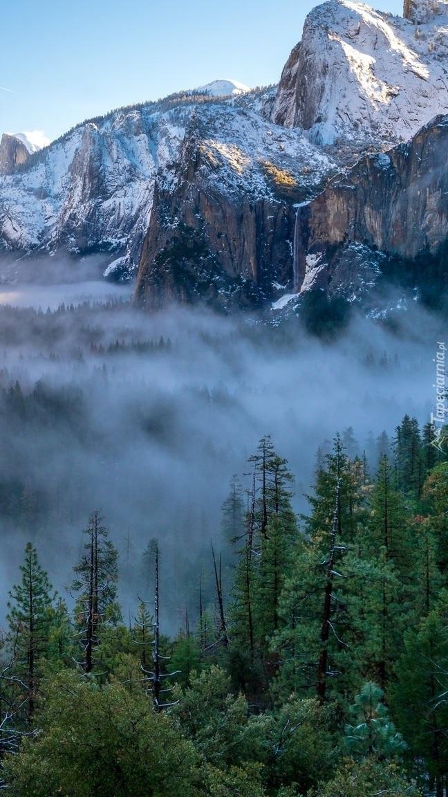 Mgła nad lasami