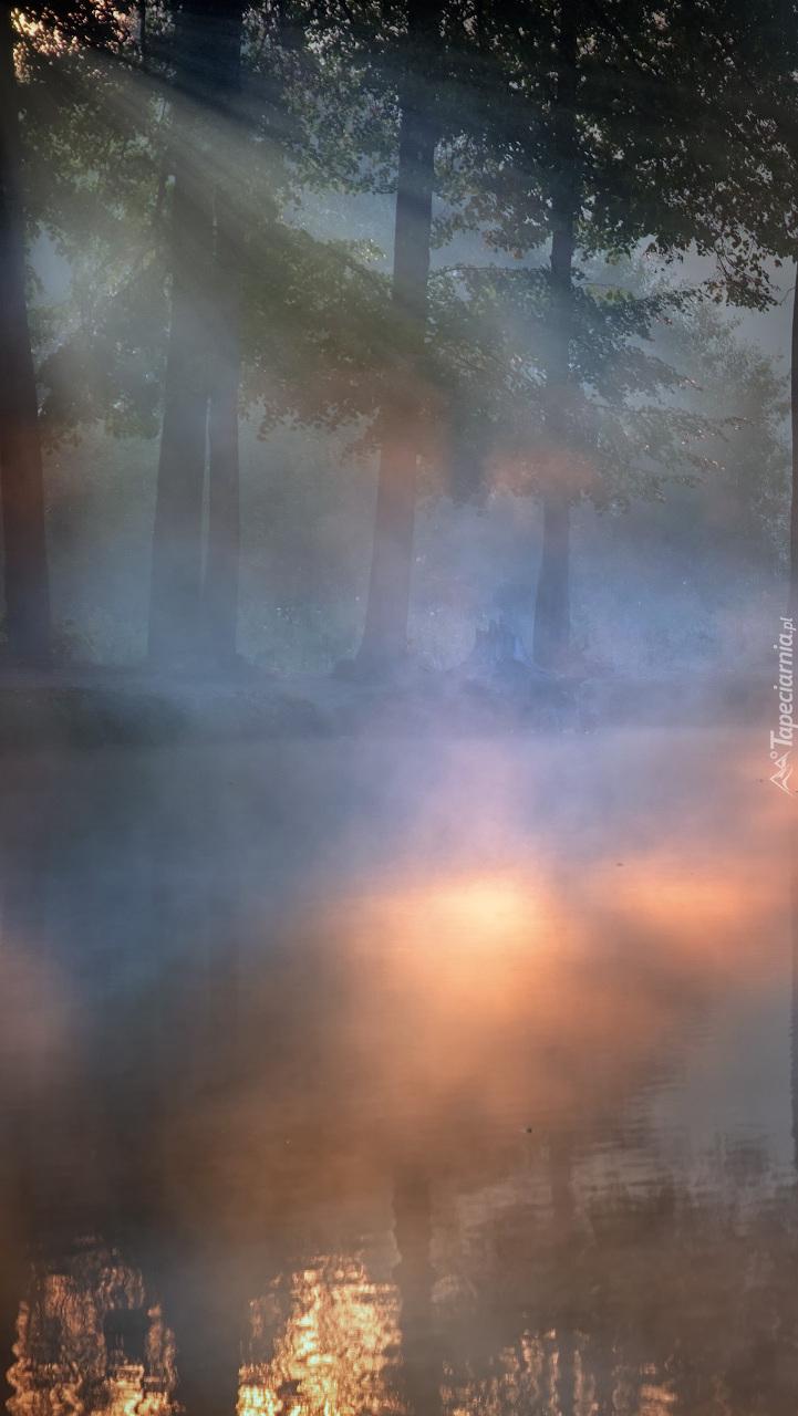 Mgła nad leśną rzeką