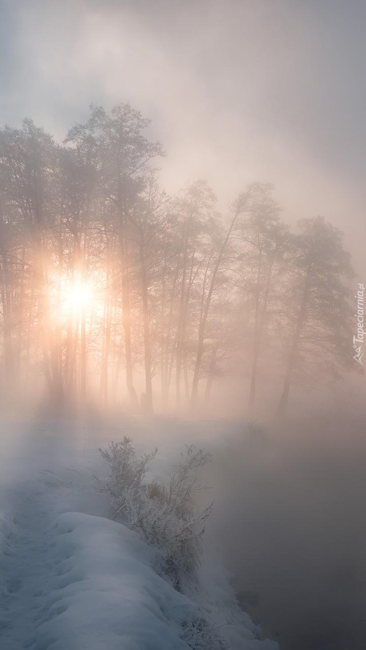 Mgła nad rzeką